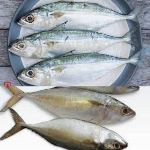 Bagda fish