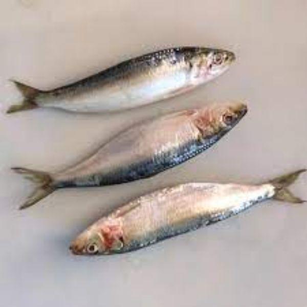 sardin fish